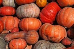 Calabazas de diversos colores y forma Autumn Harvest Fotografía de archivo