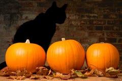 Calabazas de Halloween Foto de archivo libre de regalías