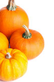 Calabazas de Halloween del otoño aisladas Imagen de archivo libre de regalías
