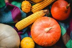 Calabazas de la acción de gracias con los granos sobre la visión superior combinada acogedora Todavía del otoño vida Imagen de archivo