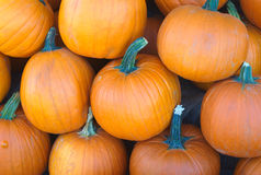Calabazas de la calabaza anaranjada en el mercado para Halloween o la acción de gracias Imágenes de archivo libres de regalías