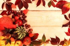Calabazas de la cosecha del otoño con las manzanas foto de archivo libre de regalías