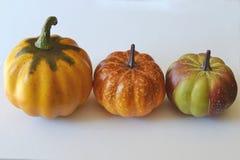 Calabazas de la cosecha en fila, en el fondo blanco Imagen de archivo