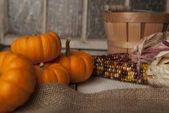 Calabazas de la naranja de Miniture Imagen de archivo libre de regalías