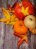 Calabazas de octubre Imágenes de archivo libres de regalías