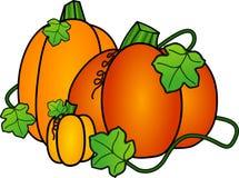Calabazas de otoño Imágenes de archivo libres de regalías