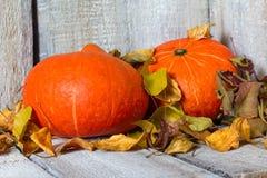 Calabazas de otoño con las hojas de otoño en el fondo de madera blanco Fotos de archivo libres de regalías