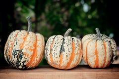 Calabazas de otoño en tarjeta de madera Fotos de archivo