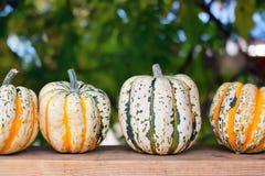 Calabazas de otoño en tarjeta de madera Foto de archivo libre de regalías