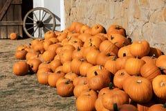 Calabazas de otoño maduras en la granja Foto de archivo libre de regalías