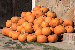 Calabazas de otoño maduras en la granja Imagenes de archivo