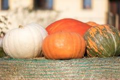 Calabazas de otoño maduras en la granja Foto de archivo