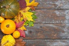 Calabazas de otoño Imagen de archivo libre de regalías
