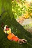 Calabazas de Víspera de Todos los Santos en un árbol Imagen de archivo