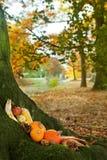 Calabazas de Víspera de Todos los Santos en un tronco de árbol Imagenes de archivo