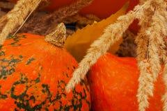 Calabazas decorativas, oídos, hojas de otoño para Halloween y día de la acción de gracias Fotos de archivo