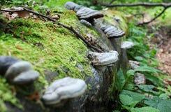 Calabazas en árbol caido verano Fotos de archivo