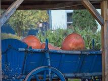 Calabazas en carro viejo azul con la rueda de madera fotografía de archivo