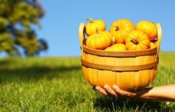 Calabazas en cesta a disposición outdoor Imagen de archivo libre de regalías