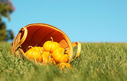 Calabazas en cesta outdoor Fotografía de archivo
