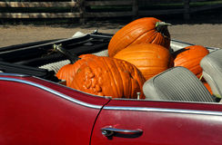 Calabazas en convertible Fotos de archivo