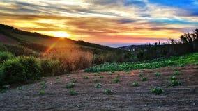 Calabazas en la puesta del sol Imagen de archivo