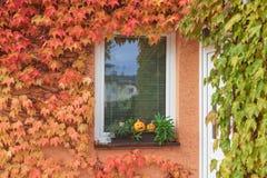 Calabazas en la ventana con las plantas que suben coloridas horizontal Imágenes de archivo libres de regalías