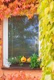 Calabazas en la ventana con las plantas que suben coloridas verticalmente Fotografía de archivo libre de regalías