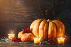 Calabazas en un vector de madera Aún-vida del otoño Víspera de Todos los Santos Foto de archivo libre de regalías