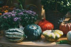 Calabazas, flores, aún-vida del día de la acción de gracias Imagen de archivo libre de regalías