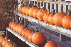 Calabazas frescas de la granja de la cosecha en estante en mercado, Halloween y acción de gracias Fotografía de archivo libre de regalías