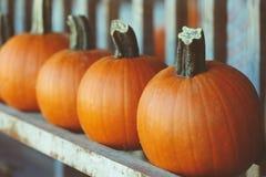 Calabazas frescas de la granja de la cosecha en estante en mercado, Halloween y acción de gracias Foto de archivo libre de regalías