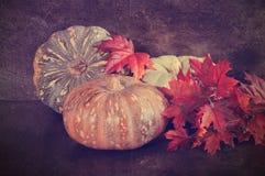Calabazas grandes del multicolor con las hojas de otoño Fotos de archivo libres de regalías