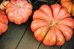 Calabazas grandes en el mercado de los granjeros del otoño Fotografía de archivo