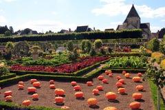 Calabazas grandes en un jardín vegetal orgánico Foto de archivo