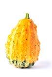 Calabazas gruesas amarillas y verdes Fotografía de archivo