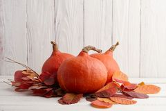 Calabazas japonesas rojas para Halloween y la acción de gracias Fotografía de archivo libre de regalías