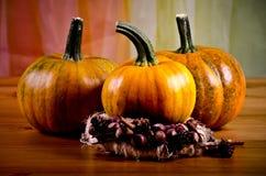 Calabazas maduras para Halloween Foto de archivo libre de regalías