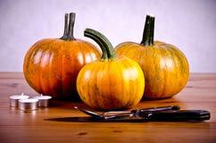 Calabazas maduras para Halloween Fotografía de archivo