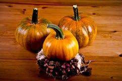 Calabazas maduras para Halloween Fotografía de archivo libre de regalías