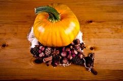 Calabazas maduras para Halloween Imagenes de archivo