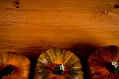 Calabazas maduras para Halloween Imagen de archivo libre de regalías
