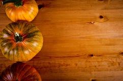 Calabazas maduras para Halloween Imágenes de archivo libres de regalías