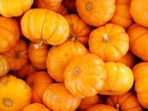 Calabazas miniatura Foto de archivo libre de regalías