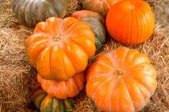 Calabazas multicoloras en el heno, cierre para arriba Cosecha del otoño, granja imagen de archivo