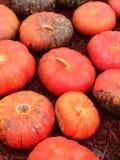 Calabazas naranja-rojas Foto de archivo