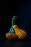 Calabazas ornamentales Foto de archivo