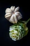 Calabazas ornamentales y col floreciente Imagen de archivo libre de regalías