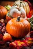Calabazas para la acción de gracias y Halloween Fotos de archivo libres de regalías