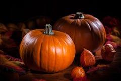 Calabazas para la acción de gracias y Halloween Fotos de archivo